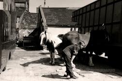 HORSE SALES 1