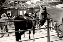 HORSE SALES 5