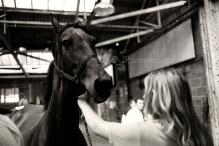 HORSE SALES 6