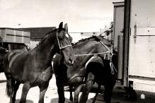HORSE SALES 3