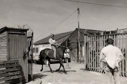 HORSE SALES 4