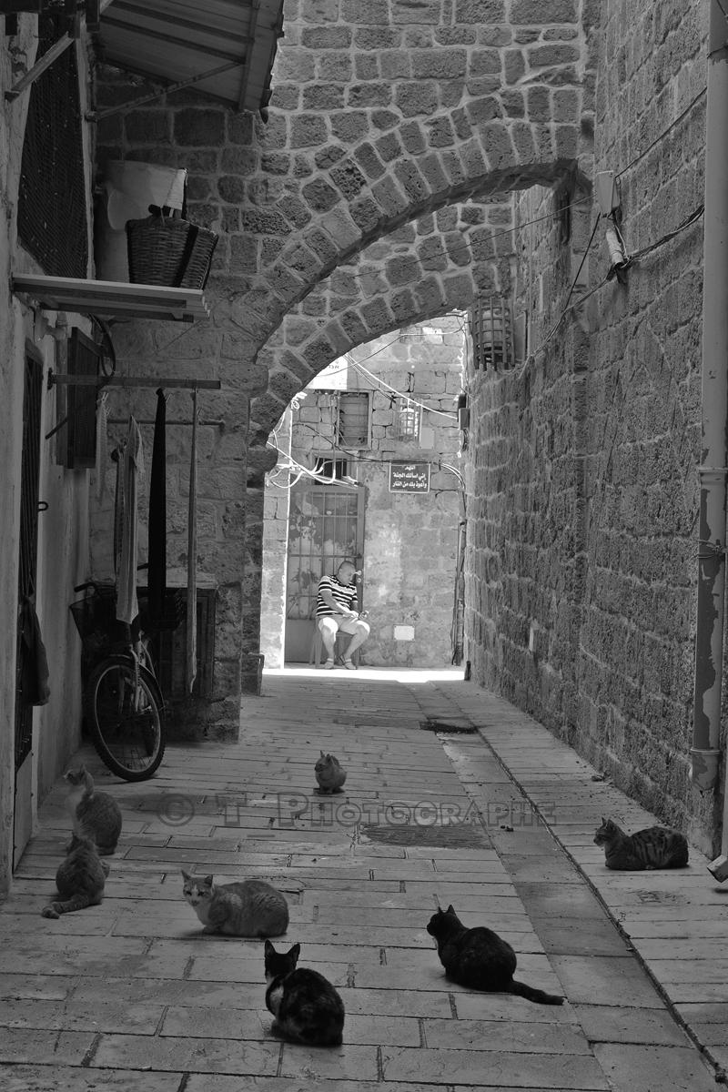 ACRE - Israël 2016